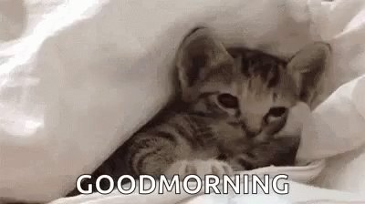 Image for the Tweet beginning: Guten Morgen! Ist der #Supermond