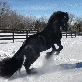 Majestic Noble #Horse :) #ifbpic.twitter.com/WReyIxkfIU