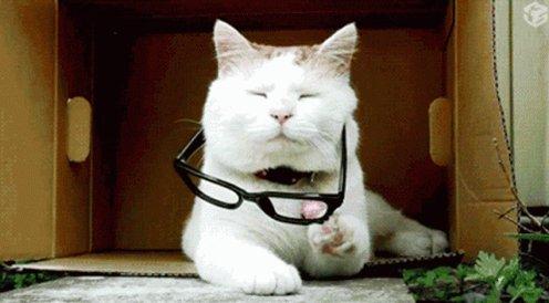 Cat Glasses On GIF
