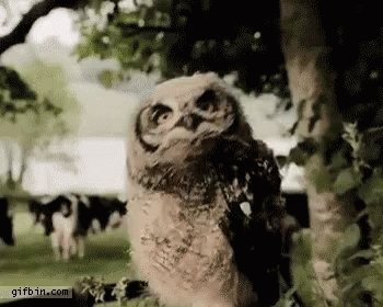 @weatherwitter Is it weird that sometimes I forget owls are birds?