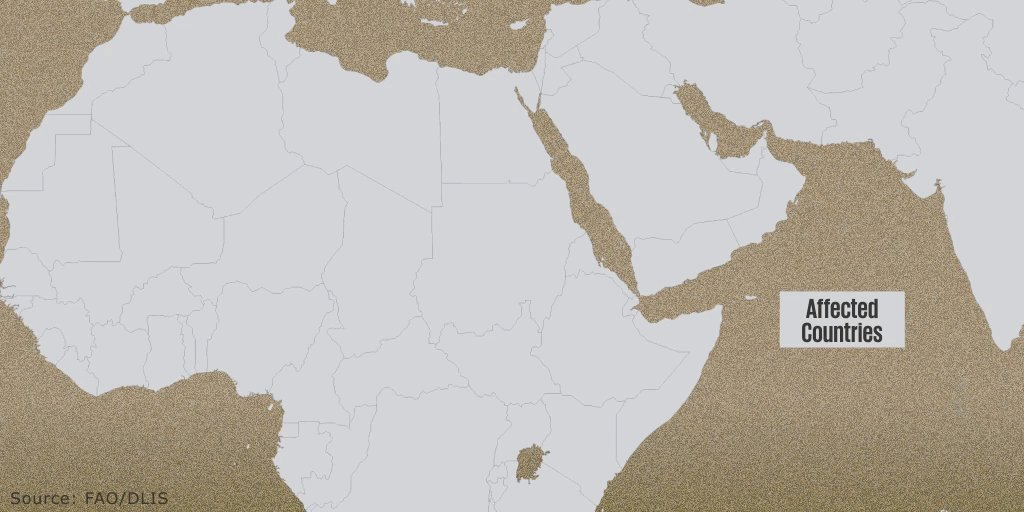 The #desertlocust outbreak threatens #foodsecurity & #livelihoods for millions in #Africa. Learn how the @WorldBank is supporting countries: https://t.co/fIoxvB83nY https://t.co/HK40t9wfSc