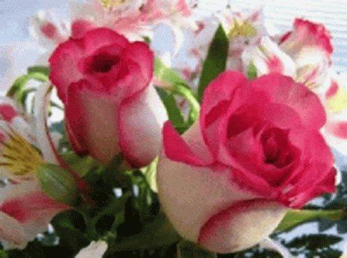 Douce essence, Parfum d'adolescence, Réminiscence! haiku. Bon après midi.😀🌺🎋🌾🌹🐞🌈😊😉💞💋
