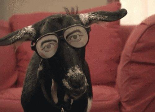 Goat trading today 🔥#lostmybrothersgoat #goatroper