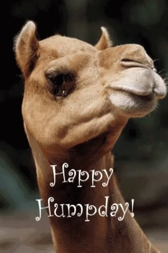 @deputygrocott Good morning! I'm Lisa, HLTA in West Sussex. Hope you all have a wonderful Wednesday 😊#FFBWednesday
