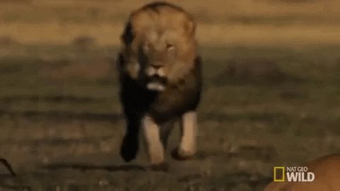 .@ODUFootball is on the hunt. Hungry and ready to Strike! #ReignOn #MakeIt2e1gn #PTR 🔵👑🦁
