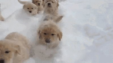 go go go dog #ilovemydog #dogstagram #ofpic.twitter.com/11SGbDSyPM