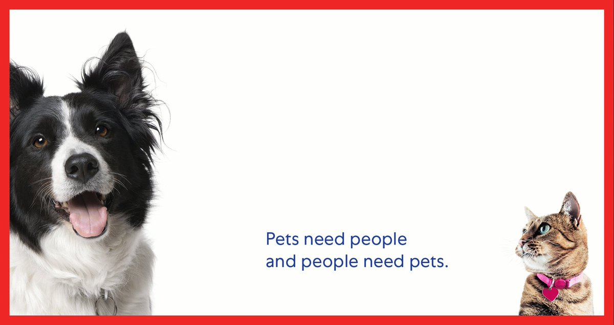 Image for the Tweet beginning: Helping pets find permanent homes