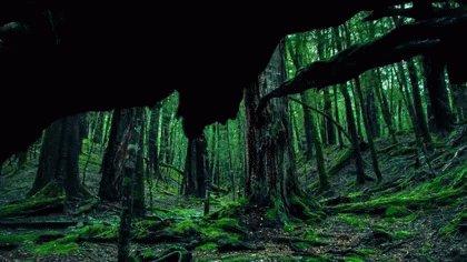 自然 森 GIF