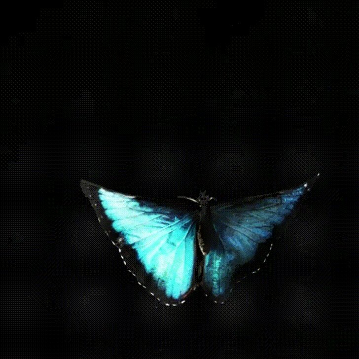 A #butterfly flapped its wings in Australia  Nature felt it in Canada  A little gentleness in the air  So far apart love found its way  butterfly wings so sweetly moving  especially on a sunny day ... misha  pic.twitter.com/DzXfIxQpya