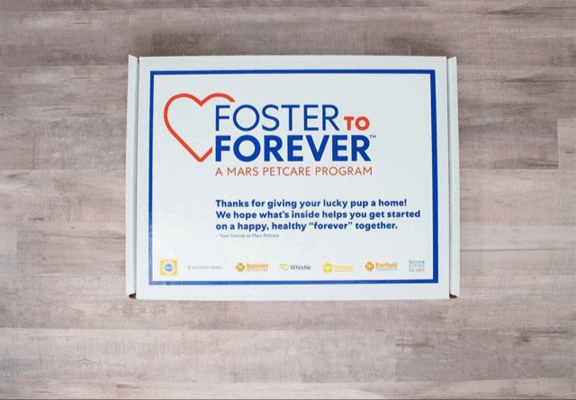 Image for the Tweet beginning: Pets need forever families! To