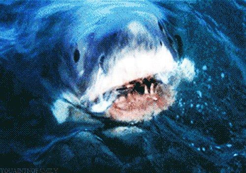 #ClimateChange Already Impacting Sharks says @mcmsharksxx ow.ly/asDD30qLSLF via @Forbes @SharkWeek @FinsUnited @ForbesScience @NoortjeSchoute @Scholastic @OurOcean @Pajjr2016 @oceanshaman @JeffBlueWave1 @oceanfdn @stockguy61 @puzzlepeaces @Boiarski @erichards24
