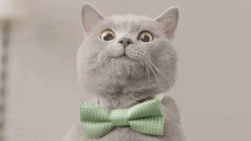 Smile Cute Cat GIF