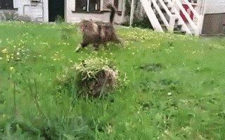 cat surprise GIF