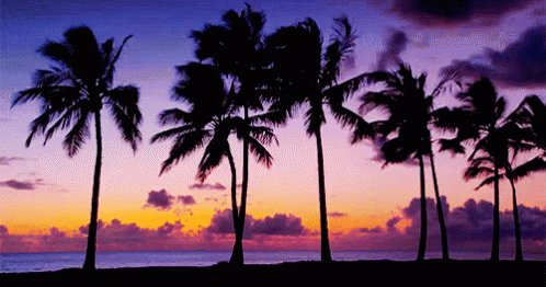 Palm Tree Island Sunset GIF