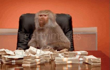 Baboon Money GIF