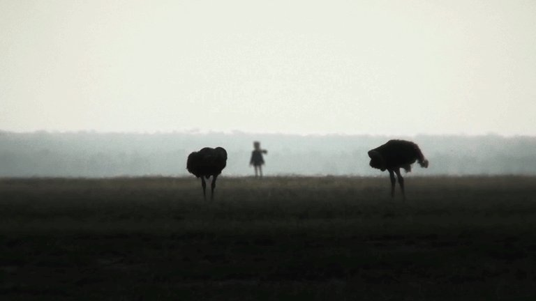 アフリカで確認された回転する謎の人型生物#でろあーと