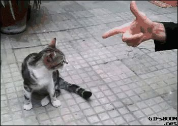 Kitty Gets Shot GIF