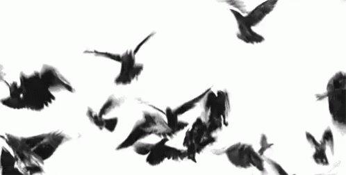 Cuervos GIF