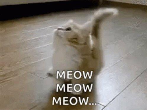 Kitten Kitty GIF