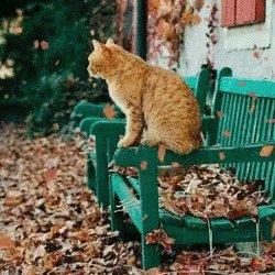 RT @thofafor: .@kattavinir: Miaow friends! Happy Caturday! Happy #InternationalCatDay! 🐾 https://t.co/S8qU113Lze
