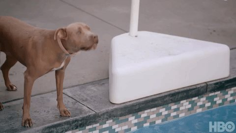 McVay's new star wideout, Cooper Pupp 🐶 #HardKnocks