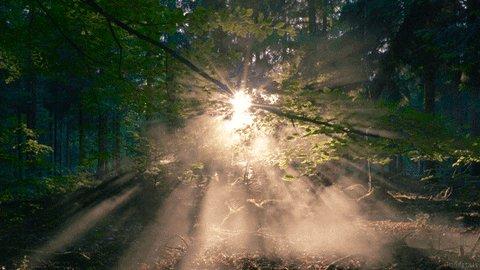 smoke sunset GIF by Living ...