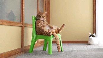 cat sitting GIF