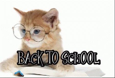 Back To School Kitten GIF