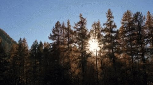 Trees Mountain GIF