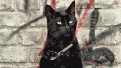 Black Cat GIF