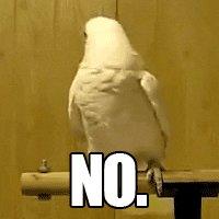 Bird Reaction GIF by Cheezburger