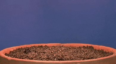 plants seeds GIF by New Eco...