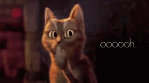 Gato Ohh GIF