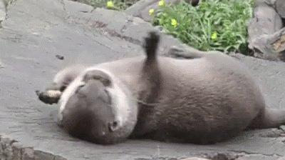 Otter Animals GIF