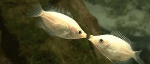 Fish Reaction GIF by MOODMAN
