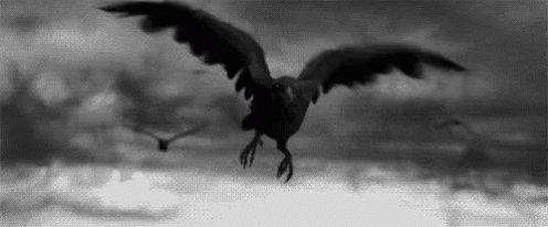 Cuervo GIF