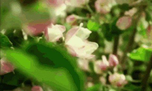 Flowers Grow GIF