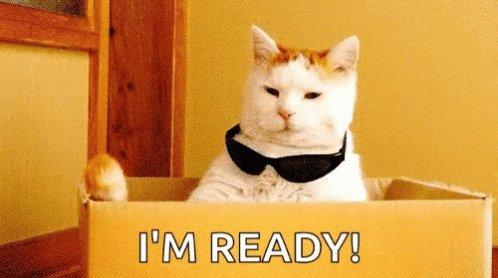Im Ready Cat GIF