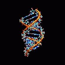 RNA DNA GIF