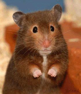 Mouse Wiggle GIF