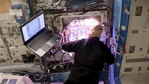 Mientras se preparaban para dar la bienvenida a los astronautas de Crew-1 al @Space_Station, la tripulación pasó la semana trabajando en investigaciones de microgravedad, incluyendo examinar el crecimiento de plantas y metal fundido. #LaunchAmerica  👉 https://t.co/Rw0sMb1Lhm https://t.co/yvGW8P2MRK