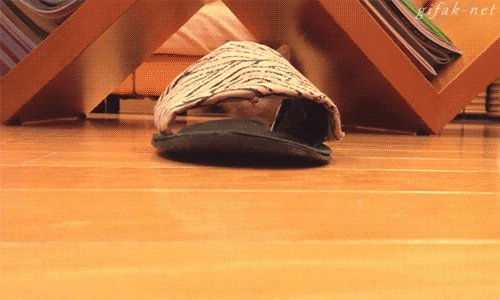 kitten slipper GIF