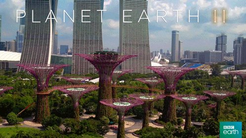 planet earth 2 city GIF by BBC Earth