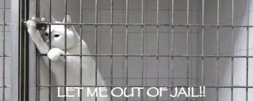 Let Me Out Of Jail!! GIF