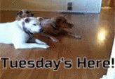 Rolling into Tuesday like... #tuesdayvibe