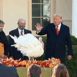"""""""Corn, I hereby grant you a full pardon.""""  Pres. Trump participates in annual presidential turkey pardon:"""
