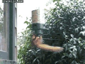squirrel spinning GIF by Ch...