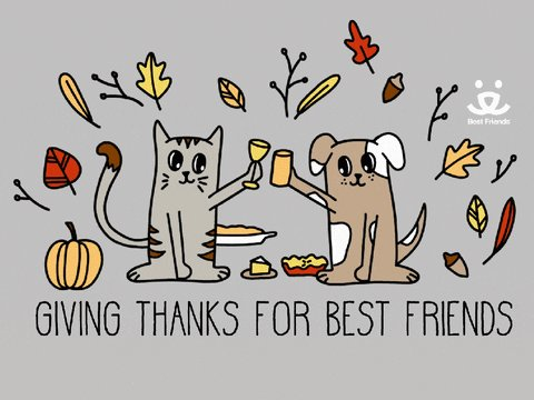 Happy Thanksgiving to all my lovely American friends 💛  Hope your day is filled with love and joy...and copious amounts of pumpkin pie!