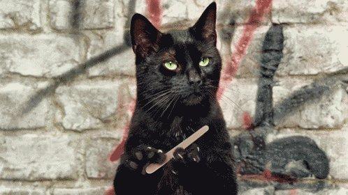 serious cat GIF