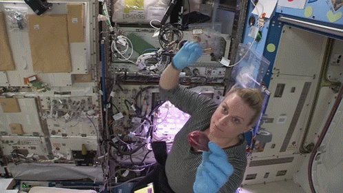 Today's @Space_Station radish harvest is complete! ☑️  NASA astronaut Kate Rubins prepped the radishes for their journey back to Earth, where scientists will analyze them. Astronauts will soon grow a second crop of the vegetables for even more science!